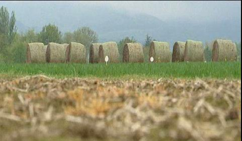 Reportage de France 3 Alsace : Le retour du chanvre en Alsace